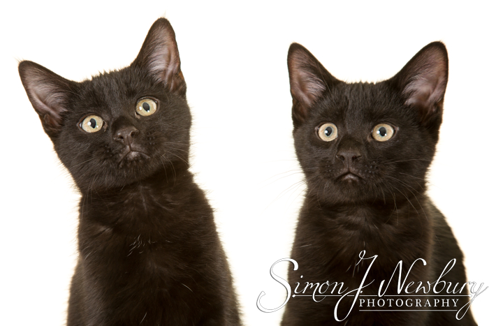 Pet Photographer in Cheshire. Cheshire pet photographer. Cats & kittens photographer in Cheshire. Crewe pet photographer. Cheshire professional pet photographs