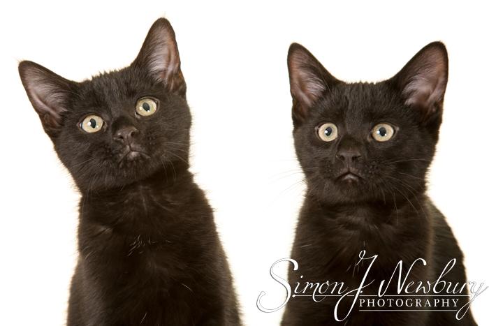 Pet Photographer in Cheshire. Cheshire pet photographer. Cats & kittens photographer in Cheshire. Crewe pet photographer. Cheshire professional pet photographs